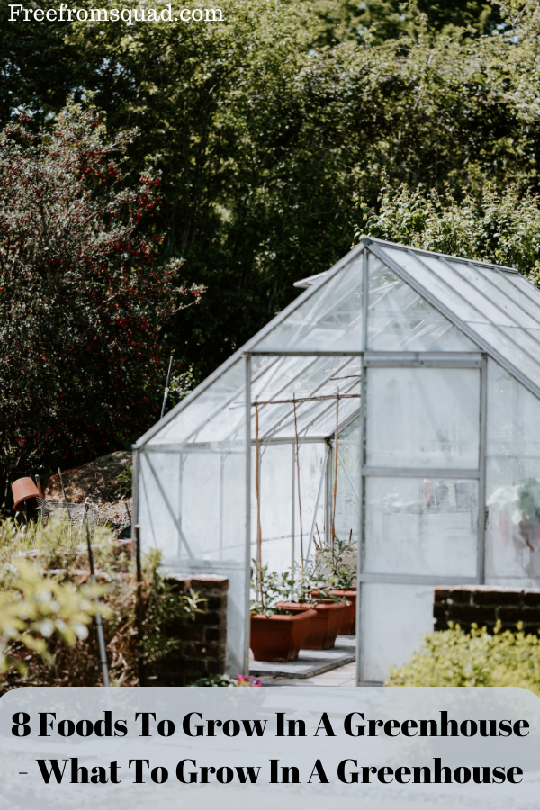 8 Foods To Grow In A Greenhouse - What To Grow In A Greenhouse