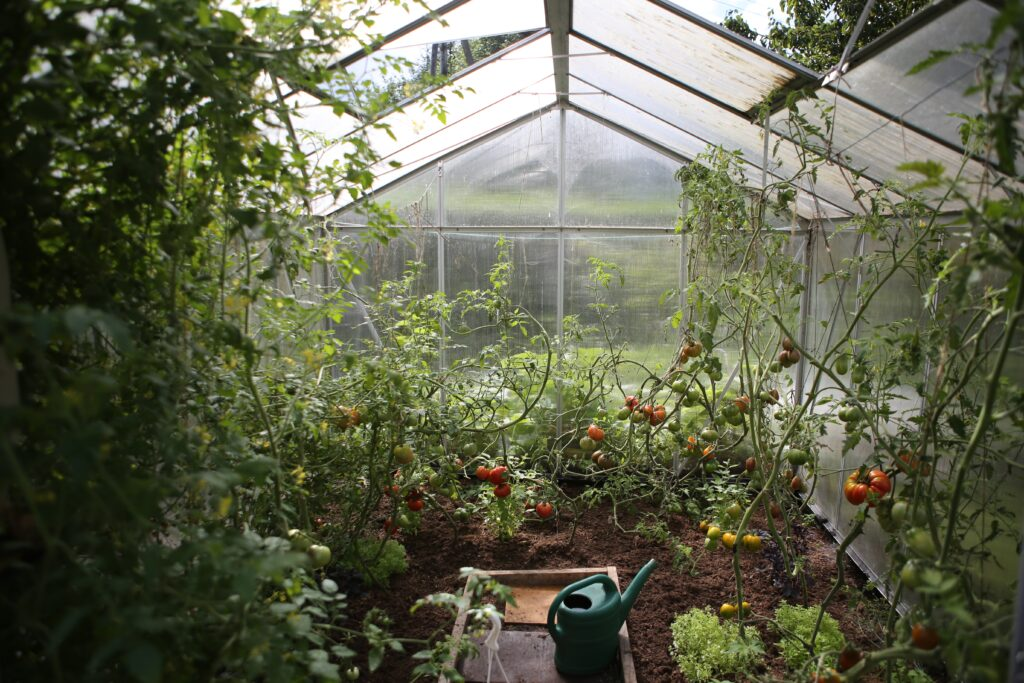 8 things to grow in a greenhouse - what to grow in a greenhouse